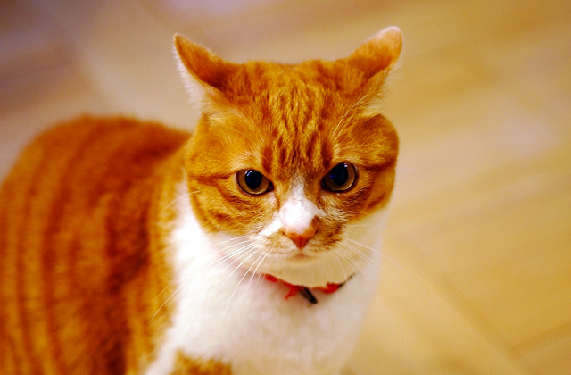姶良市東餅田にて「猫と暮らす平屋の家」の完成体感会を開催