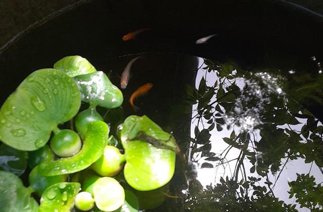MOOK HOUSE 鹿児島市与次郎にて「MOOKのメダカプレゼント」【6/13,20,27】