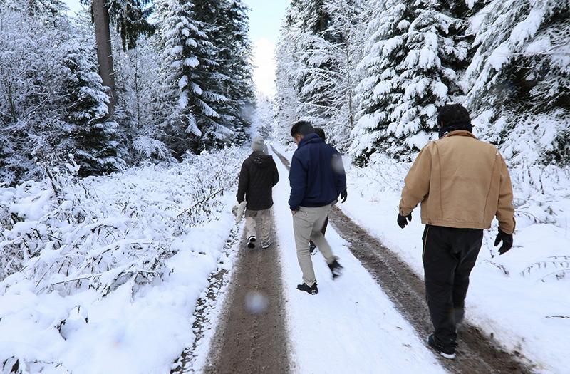 ドイツ南部に広がるシュバルツバルド(黒い森)で育った、樹齢200年〜300年の天然のもみの木