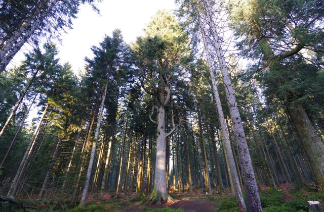 ドイツ南部シュバルツバルトの森